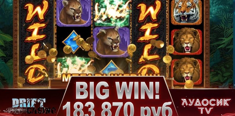 Exotic Cats New Slot ! Mega Big Win !