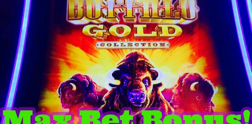 Big Win! Buffalo Gold Slot Machine, Max Bet Bonus, Live Play, By Aristocrat!