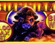 ★ BIG WIN BUFFALO ★ $8.00 MAX BET BONUS SLOT MACHINE ★