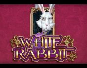White Rabbit BIG WIN — HUGE WIN — And eating dog food!!!