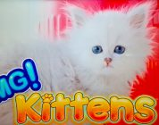 OMG! Kittens Slot — BIG WIN BONUS!