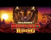 RECORD WIN BUFFALO RISING — Huge win on Casino Game — free spins (Online Casino)