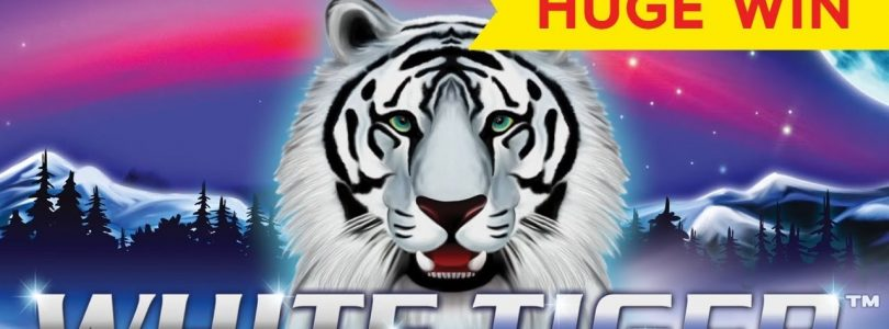 HUGE WIN! White Tiger Slot — INCREDIBLE SETUP!