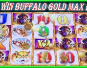 ★ BUFFALO GOLD COME BACK BIG WIN ★ SLOT MACHINE LIVE PLAY & BONUS ★