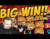 Huge Win! Safari King BIG WIN — Epic Win on Casino games from Casinodady LIVE STREAM