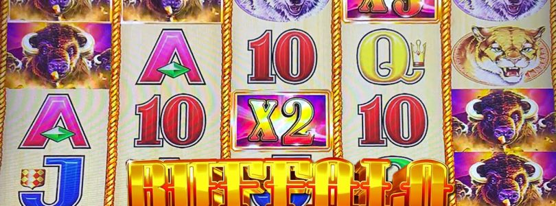 BUFFALO GOLD SLOT MACHINE BONUS BIG WIN Aristocrat Slots