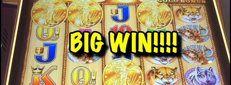 Buffalo Gold: Huge win, nice run (max bet)!