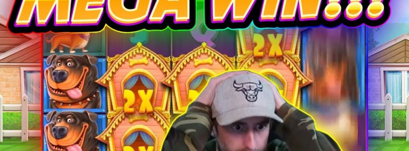 MEGA WIN!! Dog House BIG WIN — Casino Games from Casinodaddy live stream