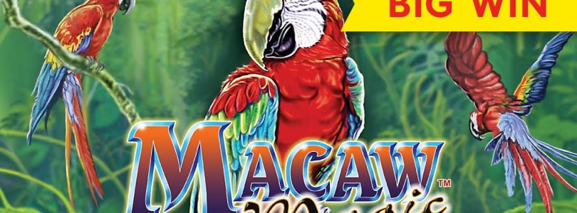 BIG WIN RETRIGGER! Macaw Magic Slot — AWESOME!